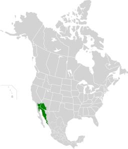Пустыне Сонора, она же - пустыня Хила (англ. Sonoran Desert; исп. Desierto de Sonora)