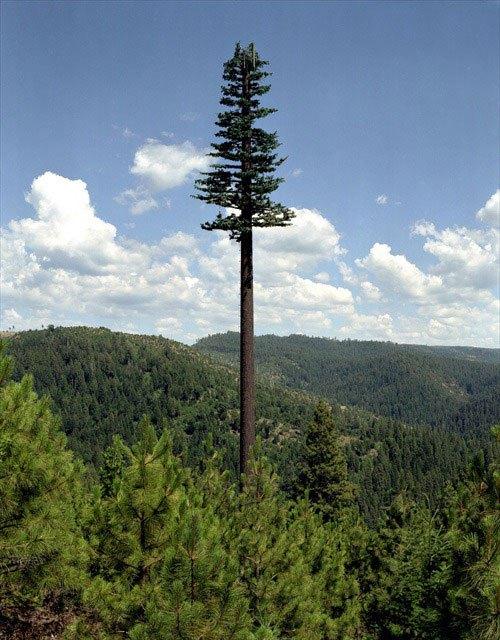 Вышка сотовой связи в виде гигантского дерева. Cell phone tower disguised as a super tree