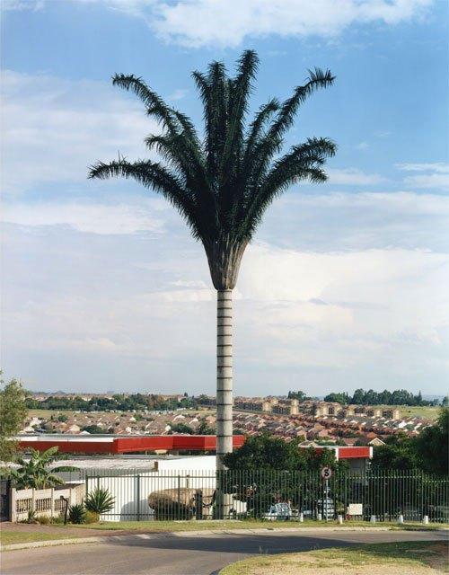 Вышка сотовой связи в виде пальмы. Cell phone tower disguised as a super palm tree