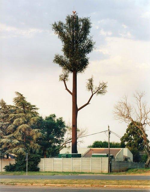 Вышка сотовой связи в виде дерева. Cell Tower Tree