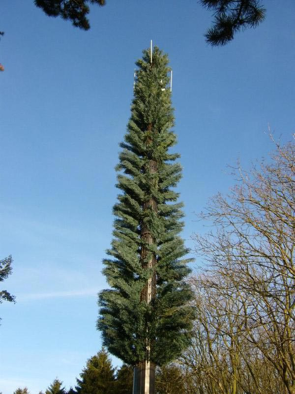 Вышка сотовой связи, замаскированная под елку (Бедфордшир, Великобритания). Cell Tower Fir Tree in Bedfordshire, United Kingdom