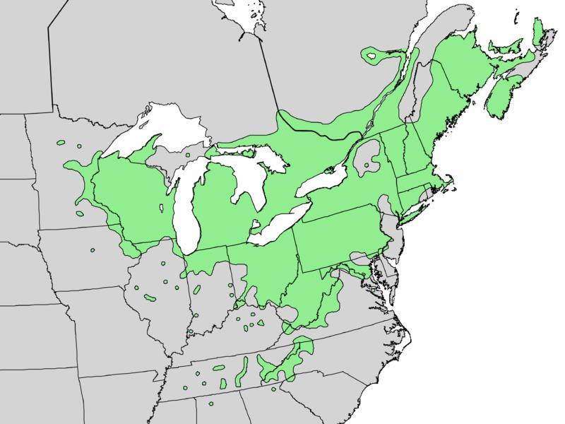 Природный ареал дерева сумах оленерогий. Range map of Rhus typhina — native to the Eastern U.S.