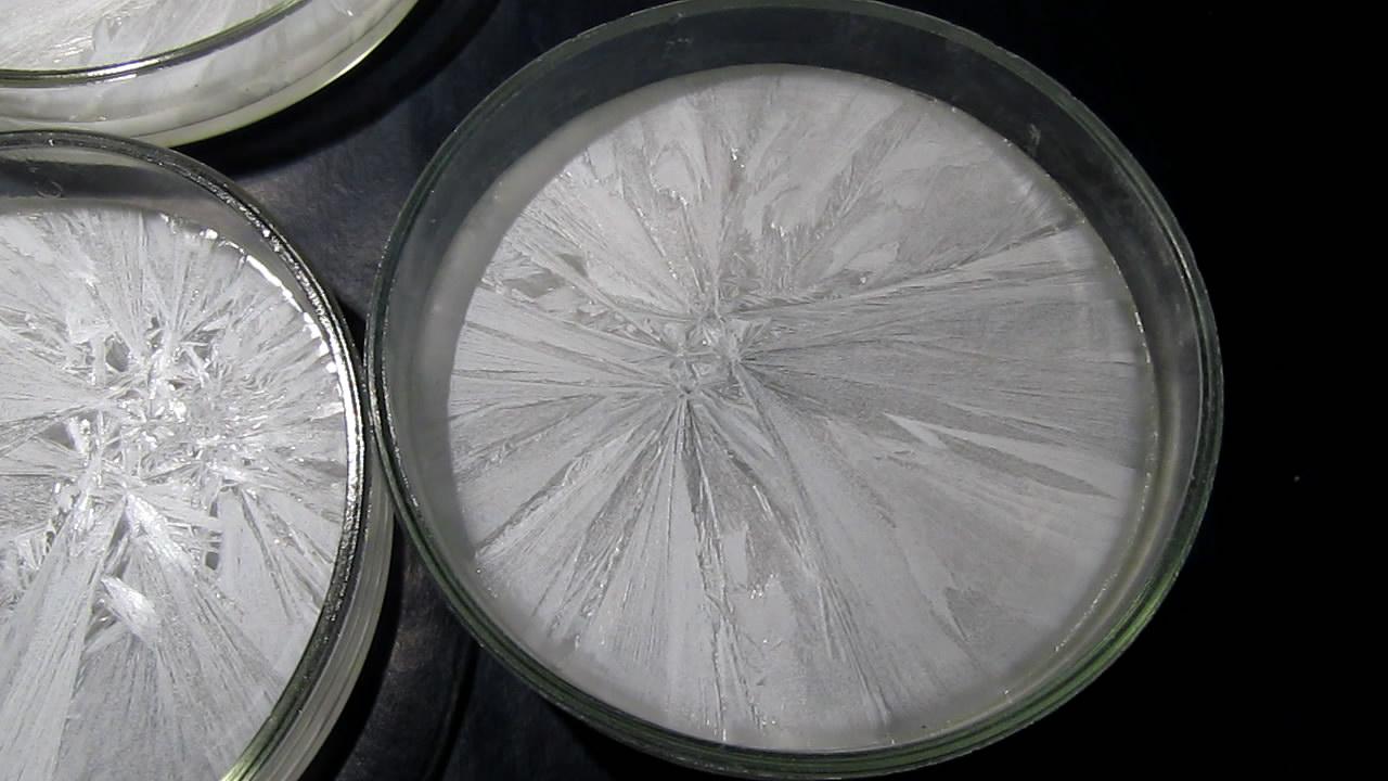 Кристаллизация пересыщенного раствора ацетата натрия в чашке Петри. Crystallization of supersaturated solution of sodium acetate in Petri dish