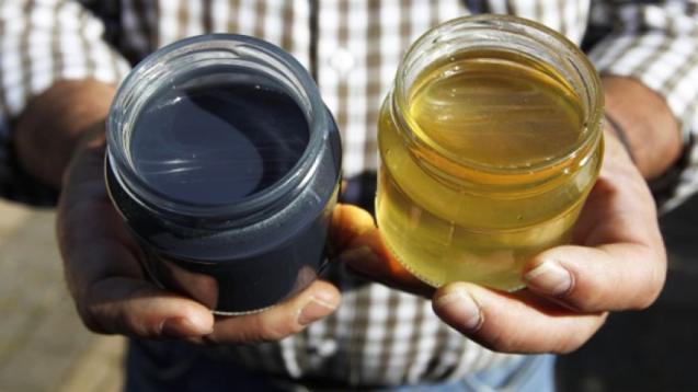 Пчелы делают цветной мед. Bees make blue and green honey
