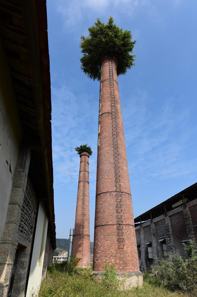 Большие деревья растут на заводских дымовых трубах. Large trees are growing on factory chimneys