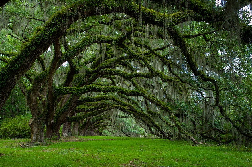 Oak Alley, South Carolina. Аллея Дубов, Южная Каролина