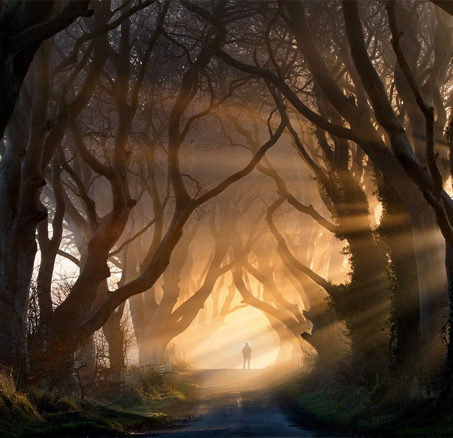 Alley of beech trees, Northern Ireland. Аллея буков, Северная Ирландия