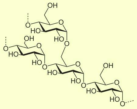 Строение молекулы амилопектина (показано место разветвления)