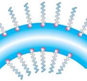 Слой молекул ПАВ на поверхности воды