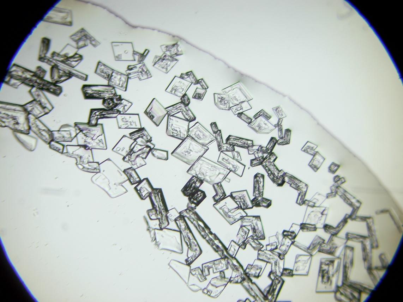 Кристаллы нитрата калия под микроскопом