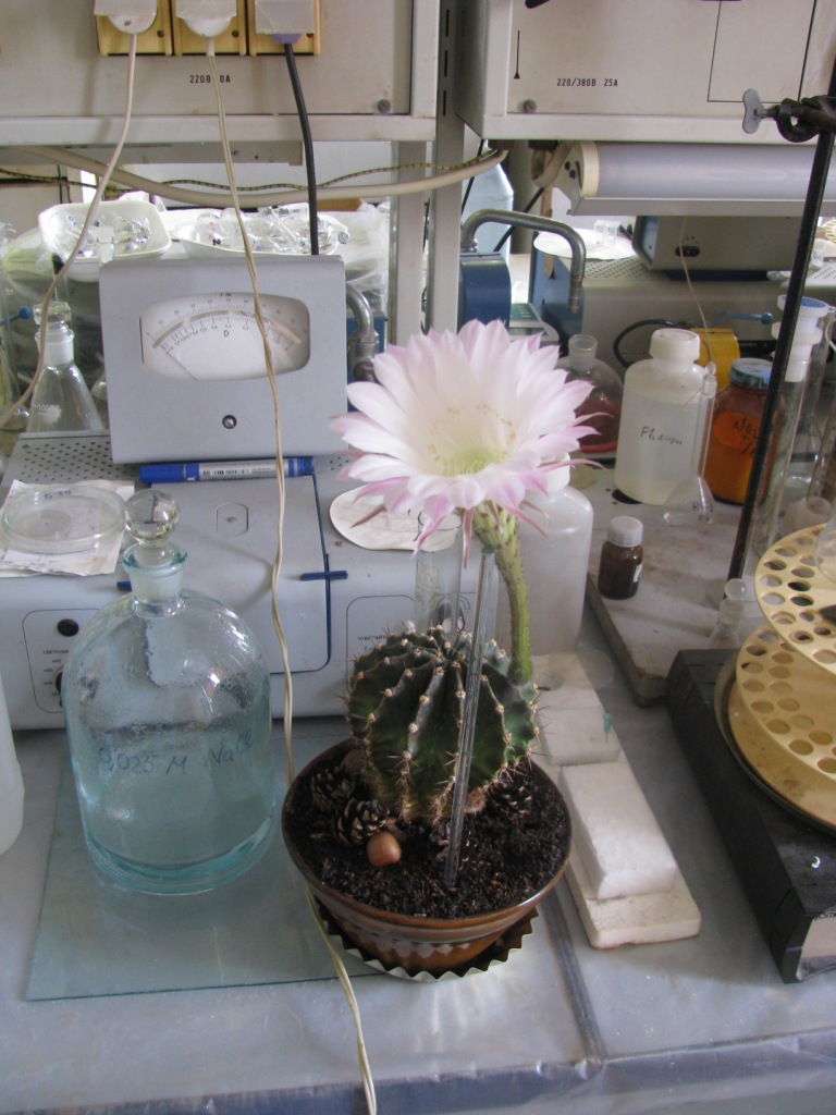 Лабораторный кактус